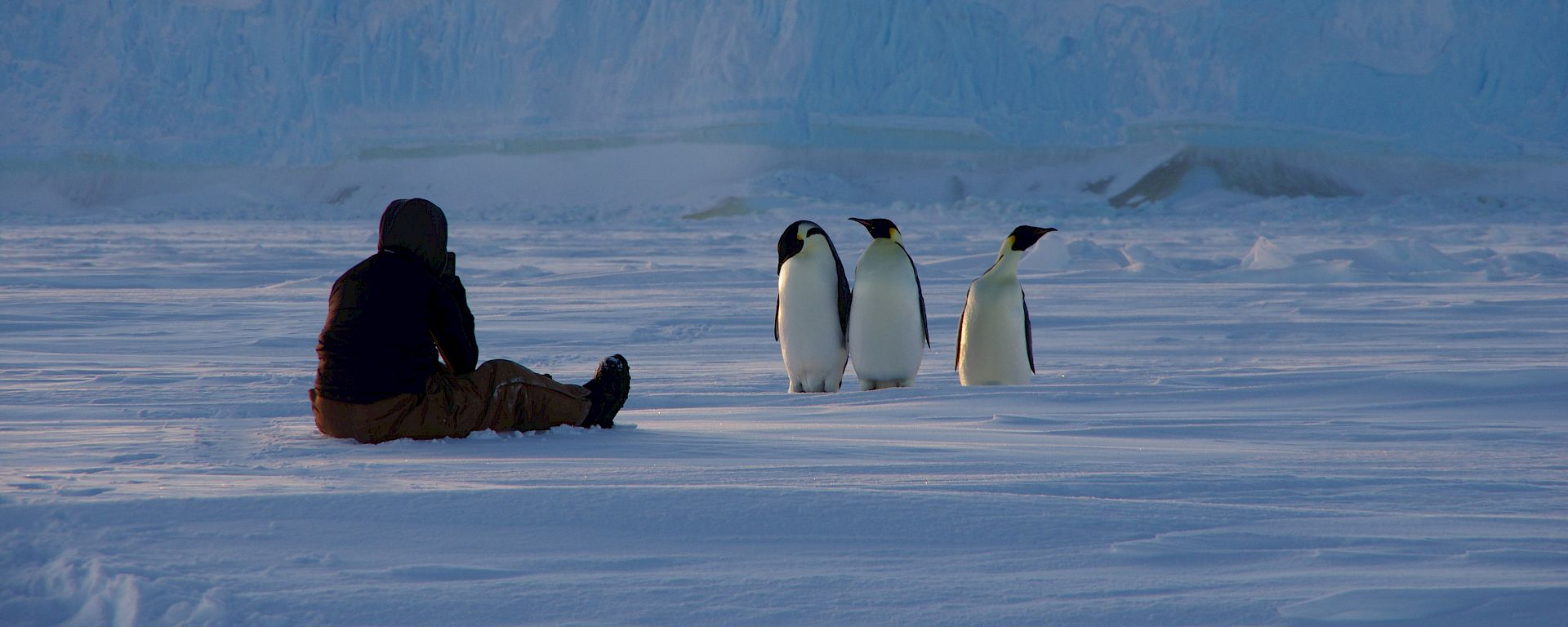 Expeditioner sitting on the sea ice observing three emperor penguins. Grounded iceberg close behind